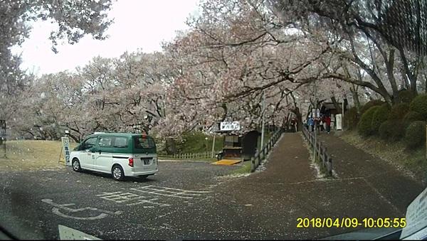 南箕輪から高遠城址公園へお花見